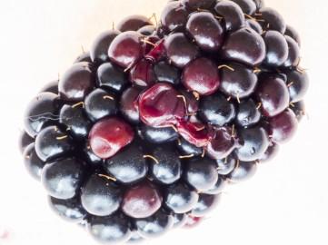 cropped-berrys-focused.jpg